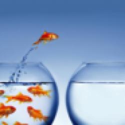 pesce salta